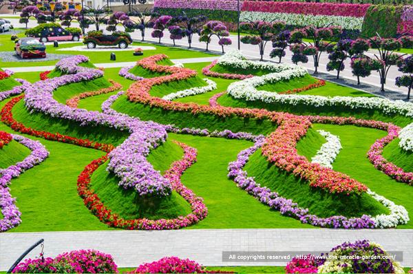 miracle-garden-dubai-09