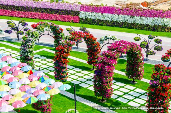 miracle-garden-dubai-13