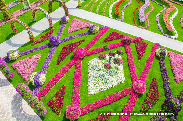 miracle-garden-dubai-26