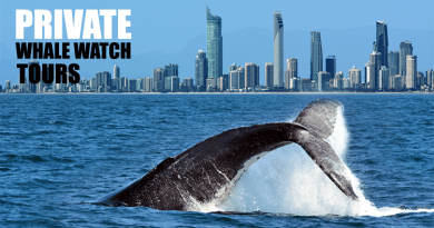 Whale Watch Private Tours