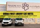Dubai Luxury Cat Hotel