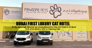 Dubai Luxury Cat Hotel