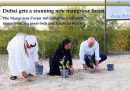 Dubai Mangrove Forest : The City Gets a Stunning New Mangrove Forest