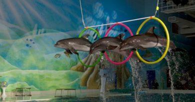 dolphins in dubai
