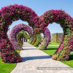 Dubai Miracle Garden: The Most Beautiful and Largest Flower Garden in World