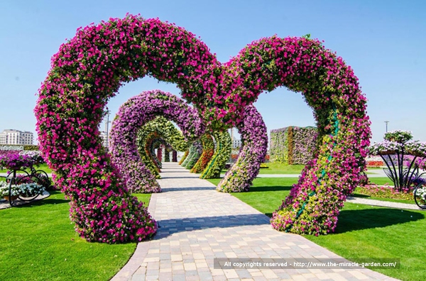 Dubai Miracle Garden The Most Beautiful And Largest Flower