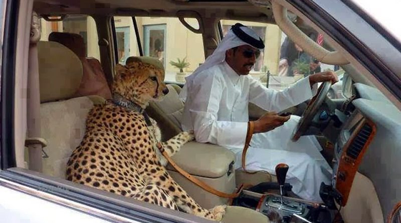 25 Amazing Things Happen Only in Dubai